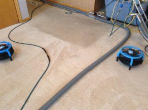 john-g-carpet-1-during